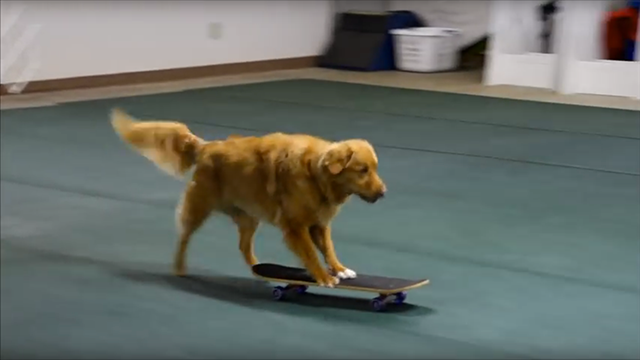 Chip on his skateboard